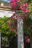 Branch of pink flowers. The garden around the house growing tree with pink flowers branch from which hangs on the column Royalty Free Stock Images