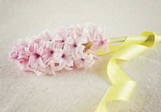 Branch of a pink hyacinth with a yellow ribbon Royalty Free Stock Photos