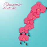 A branch of pink orchids on a bright background. Royalty Free Stock Photo