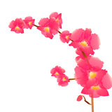A branch of pink orchids Stock Image