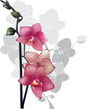 Branch of pink orchids, vector flowers Stock Photos