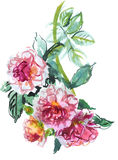 Branch of pink roses Royalty Free Stock Photos