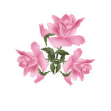 Branch of pink roses on white Royalty Free Stock Images