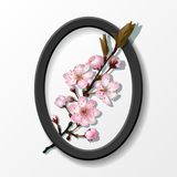 Branch of pink sakura cherry flowers in frame Royalty Free Stock Photography