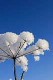 Branch of plant in winter Stock Photo