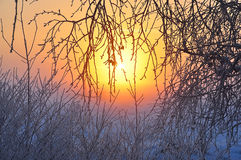 Branch plants covered with beautiful rime early morning at sunrise Royalty Free Stock Image