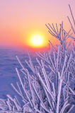 Branch plants covered with beautiful rime early morning at sunrise Royalty Free Stock Photos