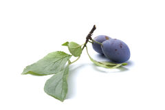 Branch of plum Royalty Free Stock Images