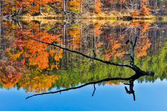 Branch Protrudes from Autumn Lake Royalty Free Stock Photo