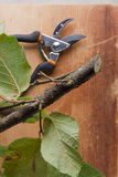 Branch and pruning shears Royalty Free Stock Images