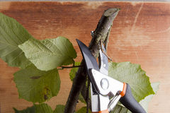 Branch and pruning shears Stock Image