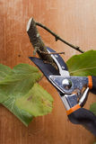 Branch and pruning shears Stock Photo