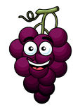 Branch of purple grape Stock Image