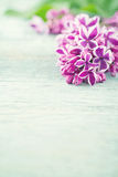 Branch of purple lilac spring flowers Stock Photo