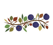 Branch with purple natural blueberries Royalty Free Stock Photos