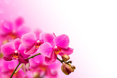 Branch of purple orchid flower on blurred bokeh. Background with free copyspace place Stock Images