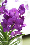 Branch of Purple orchid Royalty Free Stock Photography