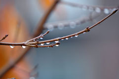 Branch on the rain Stock Image