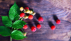 Branch of a raspberry bush with red berries. And green leaves on a brown wooden background Stock Photos