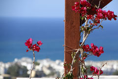 Branch of red Bougainvillea on the background blue sea Royalty Free Stock Images