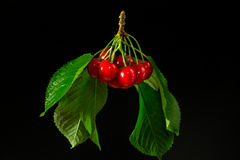 Branch of red cherries on a black background Stock Photography