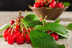 Branch of red cherry with leaves Stock Images