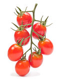 Branch red cherry tomatoes Stock Photography