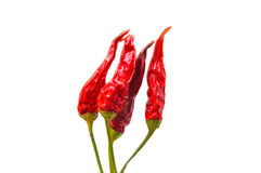 Branch of red chili peppers  isolated on white. Branch of red flame chili peppers  isolated on white background Royalty Free Stock Photo