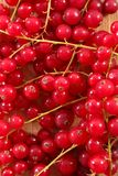 Branch of red currant. Close up on branch of red currant stock photo