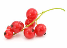 Branch of red currant fruits isolated Royalty Free Stock Photos