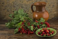 Branch of a red currant. Stock Image