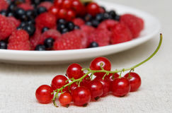 Branch of red currants. Against the background of plates with different berries Stock Photo