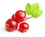 Branch red currants berry Royalty Free Stock Photos
