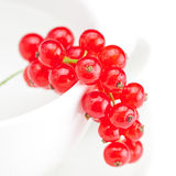 Branch of red currants and a cup Stock Images