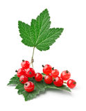 Branch of red currants with leaves. Isolated on white background stock image