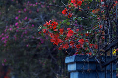 Branch with red flowers in the Gothic style Stock Photography