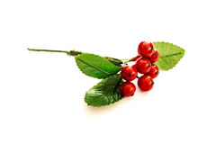 Branch of red fruits ornament isolated on white background. Branch of red fruits and greed leaves ornament isolated on white background Royalty Free Stock Photo