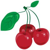 A branch of red juicy vector illustration