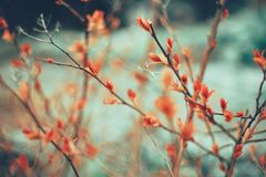 Red leaf branch green background garden nature. Branch red leaf green color background close-up spring day outdoors garden Stock Image