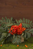 A branch of red mountain ash with a green leaf. Stock Photo