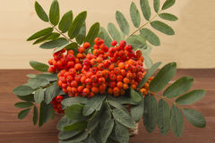 A branch of red mountain ash with a green leaf. Royalty Free Stock Photos