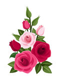 Branch of red and pink roses, buds and leaves. Royalty Free Stock Images