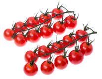Branch of red ripe cherry tomatoes with water drops. Studio Photo Stock Photo