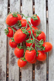 Branch of red ripe cherry tomatoes Stock Photography
