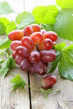 Branch of red ripe grapes with green leaves Royalty Free Stock Image