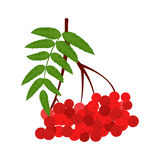 Branch of red rowan icon. In flat style isolated on white background Royalty Free Stock Photo