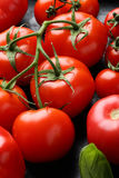 Branch of red tomatoes closeup Stock Images