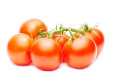 Branch of red tomatoes isolated over white Royalty Free Stock Images