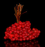 Branch of red viburnum Stock Images