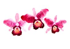 Branch of red watercolor orchids Royalty Free Stock Photography